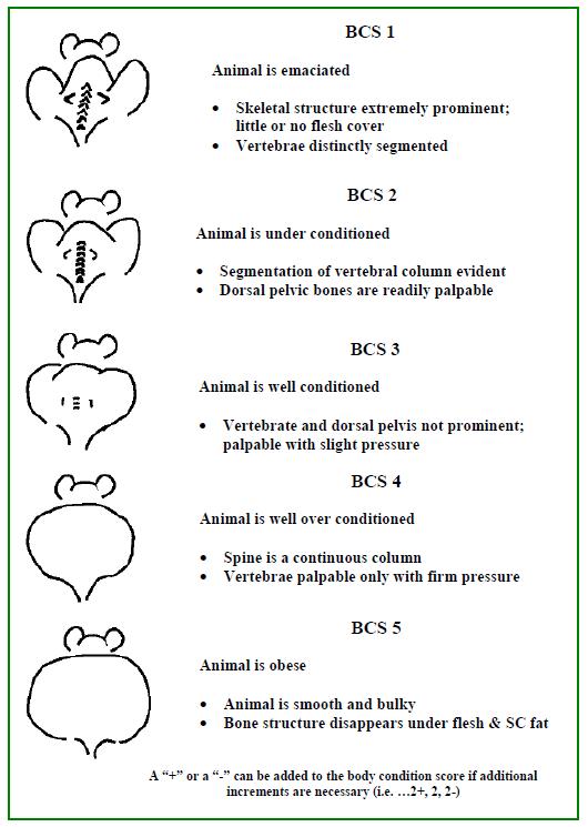Body Condition Scoring (BCS) Guide